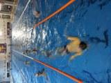 Plavecká prípravka | Plavecká Akadémia
